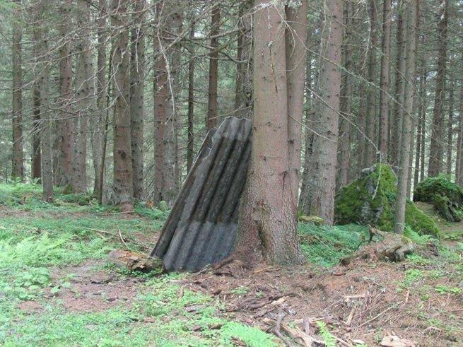 AZ-Platten-im-Wald