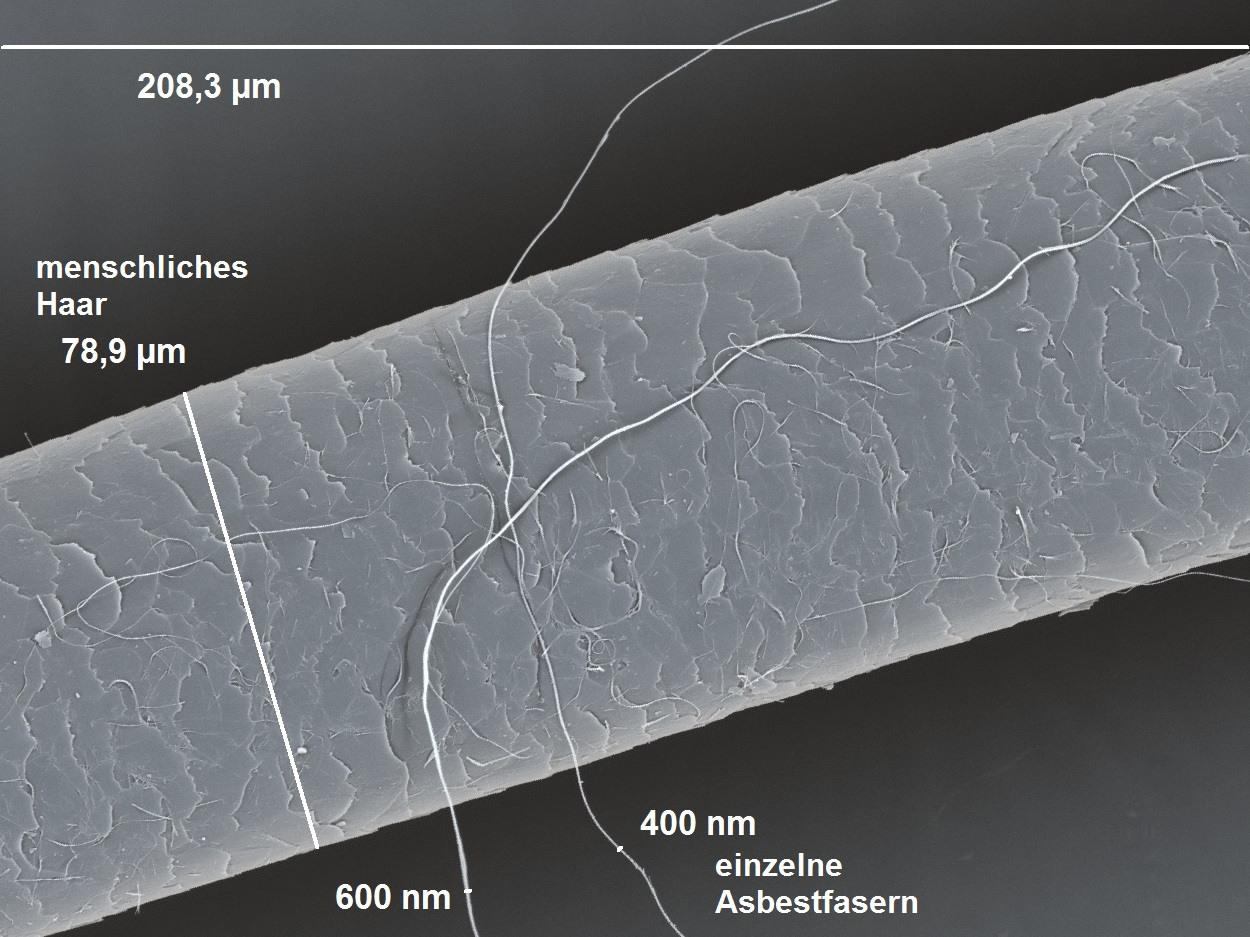 Vergleich-Haar-Asbestfaser
