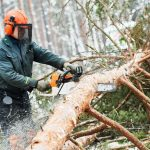 Wood_harvesting._Lumberjack_logger_worker_in_protective_gear_cutting_timber_tree_in_winter_snow_forest_with_chainsaw
