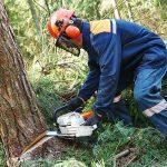 Oudoor-Worker fällt einen Baum