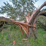 Baum_AdobeStock_169126224_parallel_dream.jpg