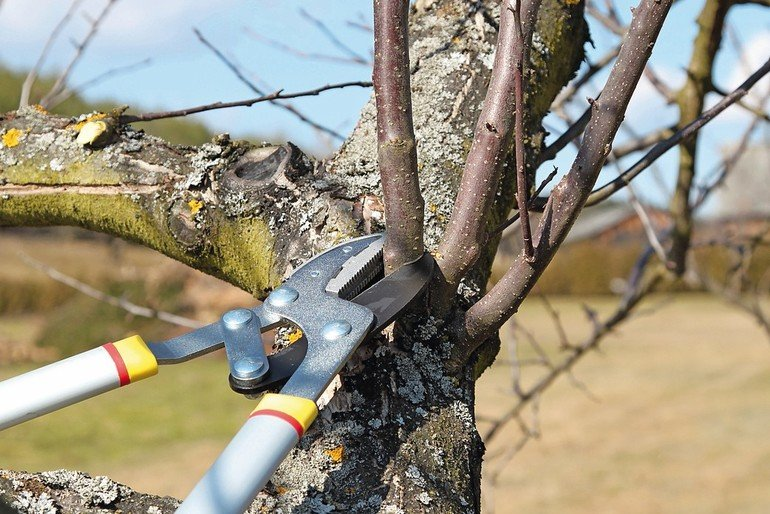 Baumpflege_AdobeStock_20949978_Raffalo.jpg