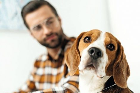 handsome_businessman_looking_at_cute_beagle