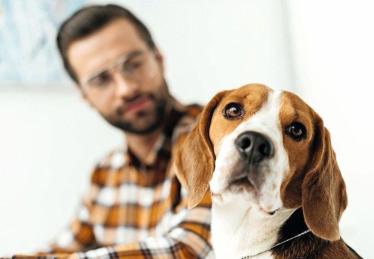 """Der """"beste Freund"""" am Arbeitsplatz? Rechtliches zum Thema Bürohund"""