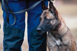 Training_of_working_dog_outdoors